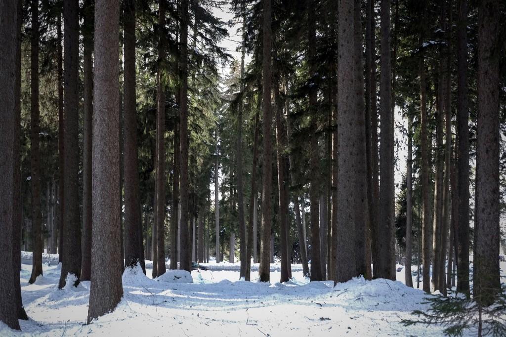 maloja_invernale-40